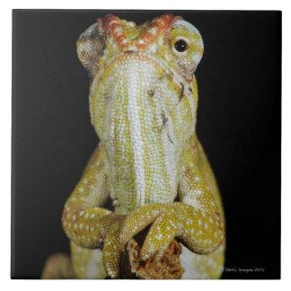 Jewelled chameleon, or Campan's chameleon Tile
