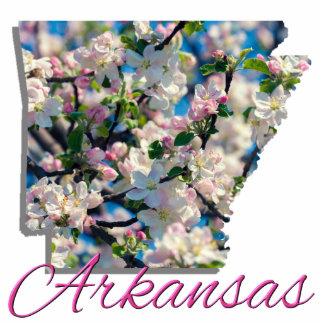 Jewelry - Pin - ARKANSAS Photo Sculpture Badge