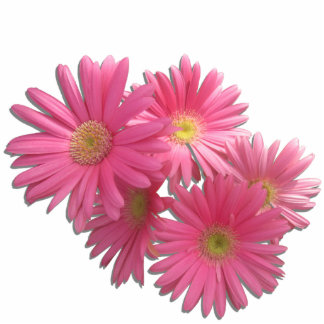 Jewelry - Pin - Dark Pink Gerbera Daisies L/F Photo Sculpture Badge