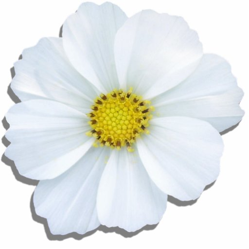 Jewelry - Pin - White Cosmos Photo Cut Outs