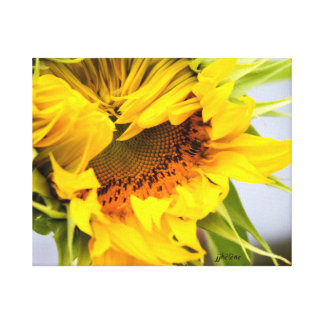 "jjhelene ""Grand Opening"" Sunflower Canvas Wrap Canvas Print"