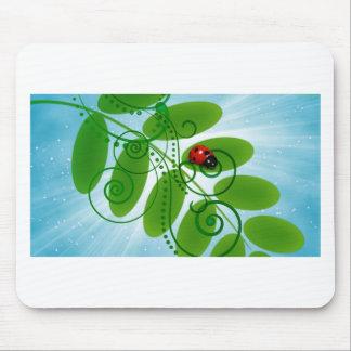 joaninha - ladybird