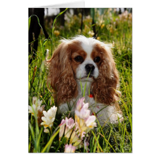 Joey Blenheim Cavalier Spaniel Card
