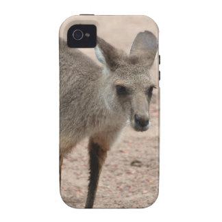 Joey Kangaroo Ready to Hop iPhone 4 Covers
