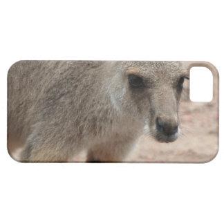 Joey Kangaroo Ready to Hop iPhone 5 Covers