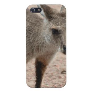 Joey Kangaroo Ready to Hop iPhone 5/5S Cover