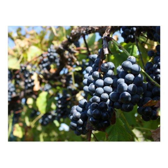 John 15:5 Grapes Postcard