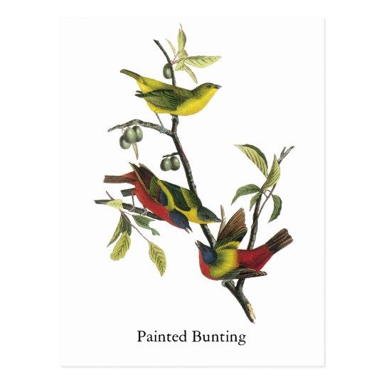 John Audubon Painted Bunting Print Postcard