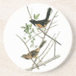 John Audubon Rufous-sided Towhee