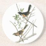 John Audubon Rufous-sided Towhee Drink Coasters