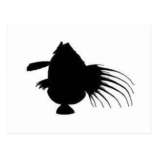 john dory fish postcard