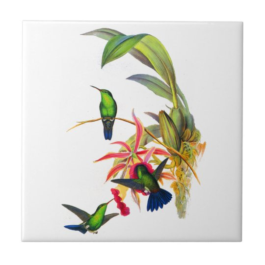 John Gould's Hummingbirds with  Pink Orchids Small Square Tile
