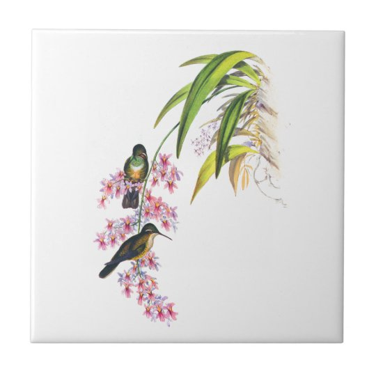 John Gould's Pink Orchids and Hummingbirds Small Square Tile