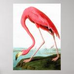John James Audubon American Flamingo Poster