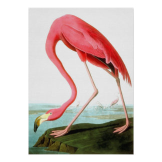 John James Audubon American Flamingo Poster
