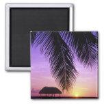 John Pennekamp State Park, Florida Keys, Key Square Magnet