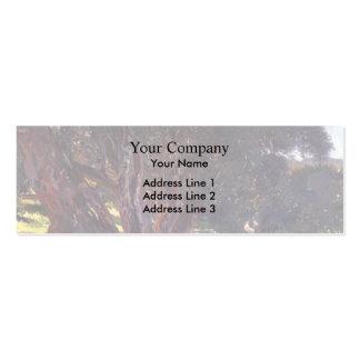 John Singer Sargent- Albanian Olive Pickers Business Card