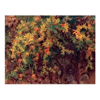 John Singer Sargent- Pomegranates Postcard