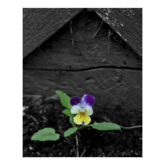 Johnny Jump up Flower 8x10 Poster