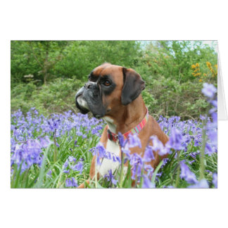 Jolie in the bluebells greeting card