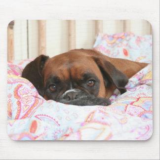 Jolie snuggled in the duvet mouse mat