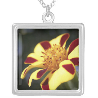 Jolly Jester Marigold Silver Plated Necklace
