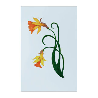 Jonquil, Daffodil, Narcissus, Right Acrylic Print