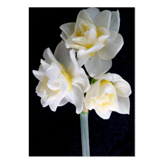 Jonquil Flower - Ecclesiastes 3:1 Tract Card / Business Card