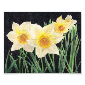 Jonquils - Flower Art Print Photograph