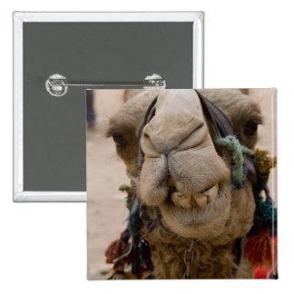 Jordan, Ancient Nabataean city of Petra. Local 15 Cm Square Badge