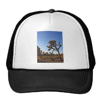 Josha Tree In California Cap