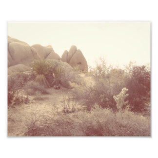Joshua Tree, Afternoon Photo Print