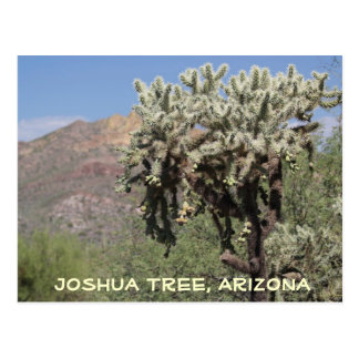 Joshua Tree, Arizona Postcard