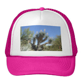 Joshua Tree Cap