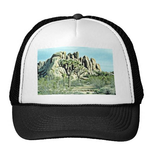 Joshua Tree, Fluted Rock Behind Hat