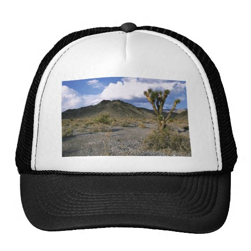 Joshua tree in the desert trucker hat