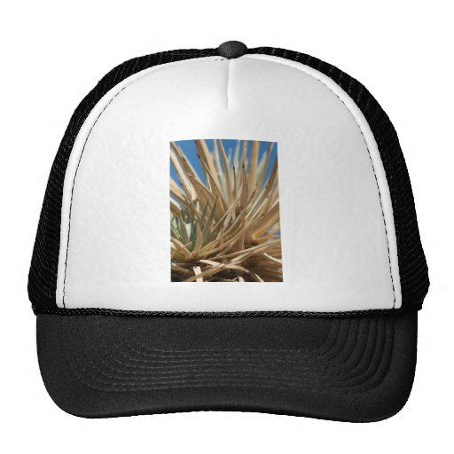 Joshua Tree Macro Mesh Hats