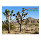 Joshua Tree National Park, California Postcard