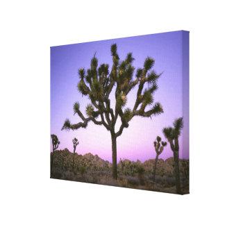 JOSHUA TREE NATIONAL PARK, CALIFORNIA. USA. CANVAS PRINT