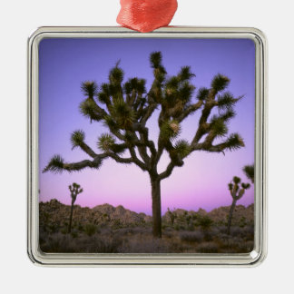JOSHUA TREE NATIONAL PARK, CALIFORNIA. USA. CHRISTMAS ORNAMENT