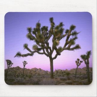 JOSHUA TREE NATIONAL PARK, CALIFORNIA. USA. MOUSE MAT