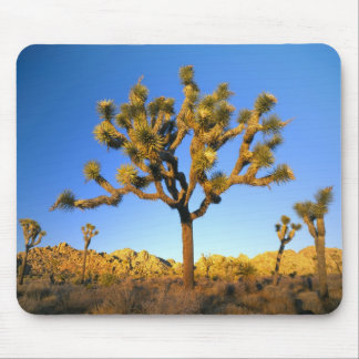 Joshua Tree National Park, California. USA. Mouse Pad