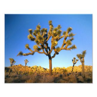 Joshua Tree National Park, California. USA. Art Photo