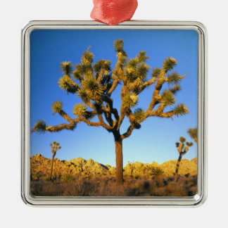 Joshua Tree National Park, California. USA. Silver-Colored Square Decoration