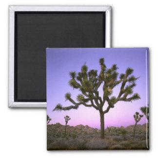 JOSHUA TREE NATIONAL PARK, CALIFORNIA. USA. SQUARE MAGNET