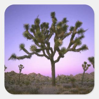 JOSHUA TREE NATIONAL PARK, CALIFORNIA. USA. SQUARE STICKER