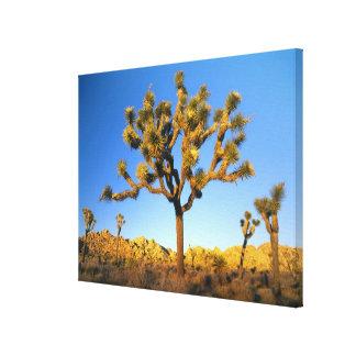 Joshua Tree National Park, California. USA. Stretched Canvas Prints