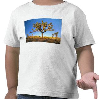 Joshua Tree National Park, California. USA. T Shirts