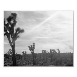 Joshua Tree Photo Print