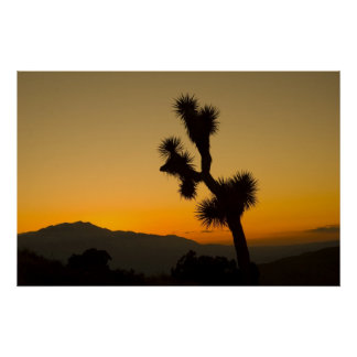 Joshua Tree Sunset Poster